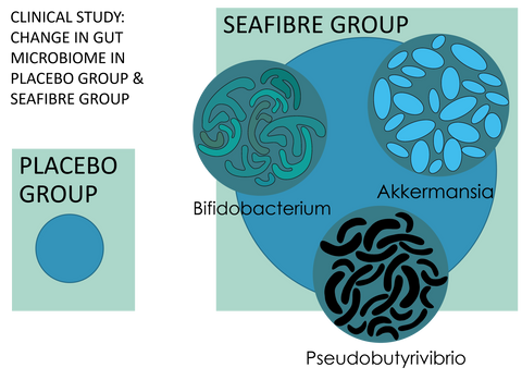 Seaweed and the gut microbiome by PhycoHealth