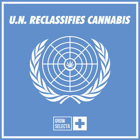 READ: U.N. reclassifies Cannabis