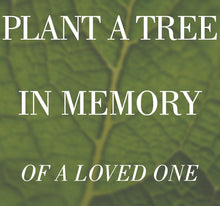 Memorial Tree Grow Kits Collection