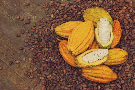 Transparency Report: How Much We Pay Cacao Growers | To'ak Chocolate