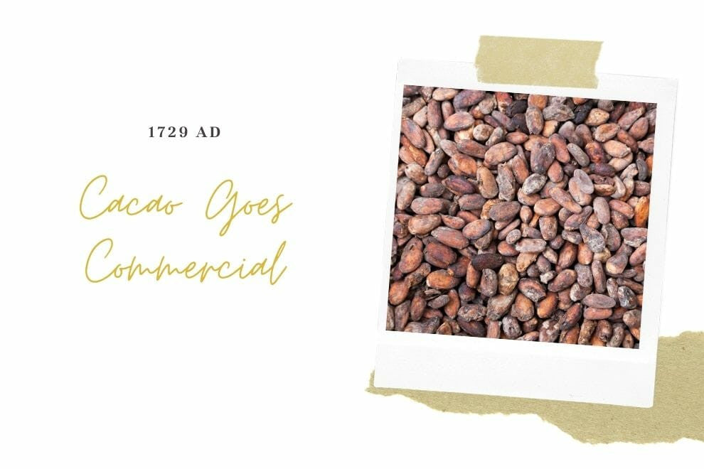 Cacao Goes Commercial