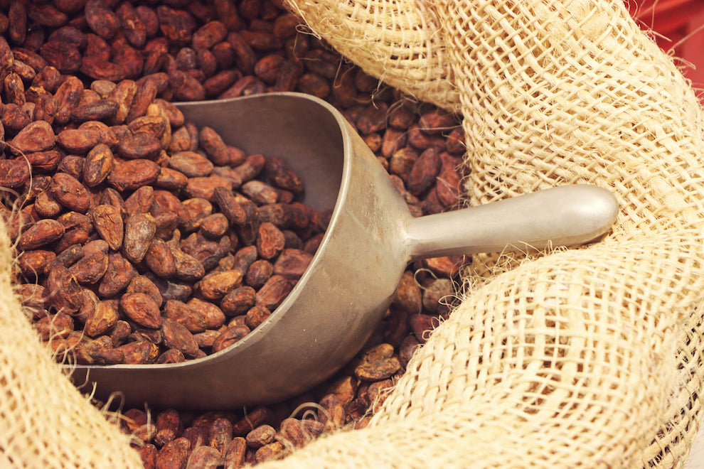 Dry cacao beans
