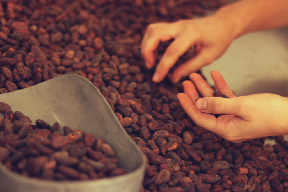 Cocoa beans in hand | To'ak Chocolate