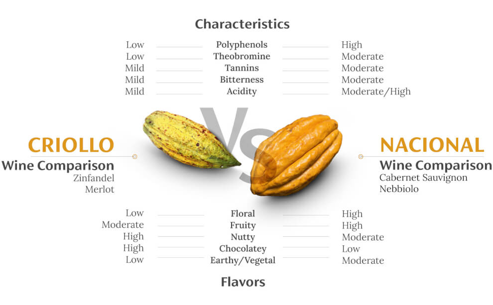 a visual comparison of the two best cacao varieties in the world