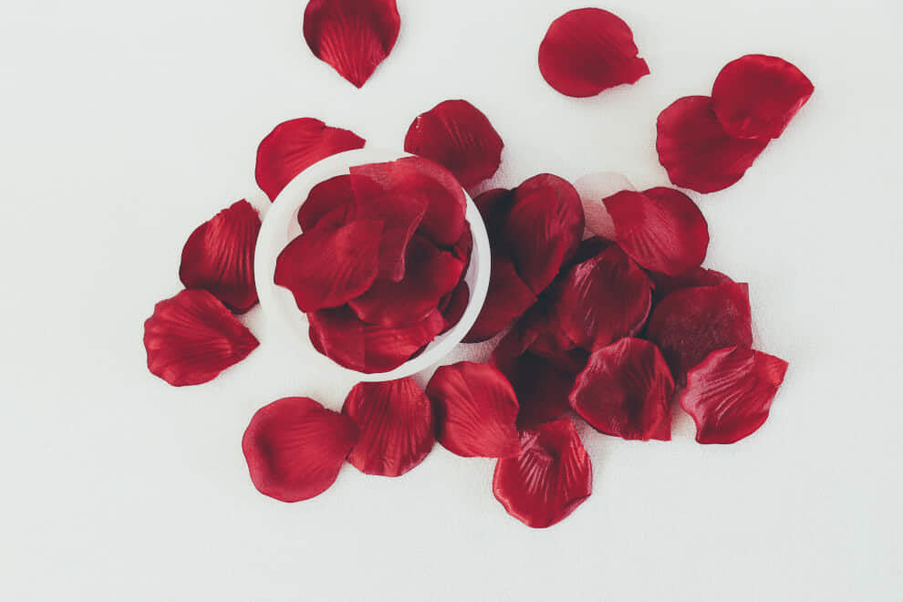rose petals on a white background | To'ak Chocolate