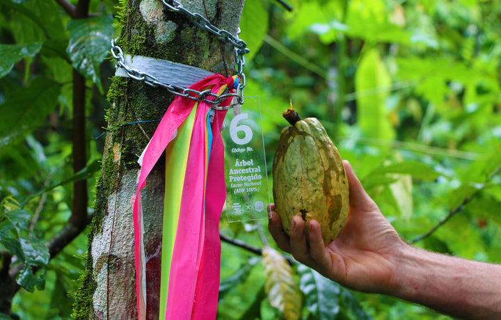 Nacional Cacao Conservation Project
