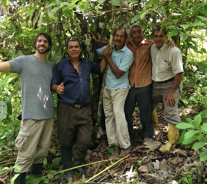 Cacao workers