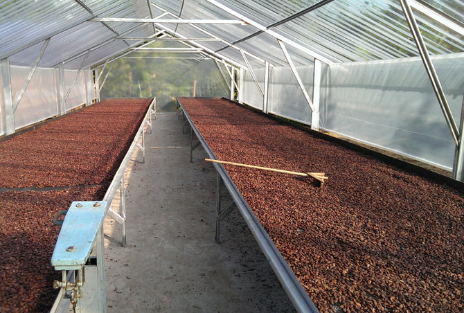 Drying Installation - Cacao