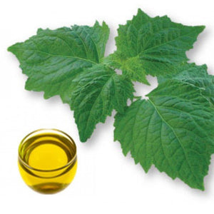 Patchouli Dark Essential Oil
