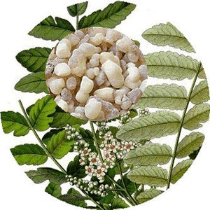Wild Frankincense (Boswella serrata) Essential Oil