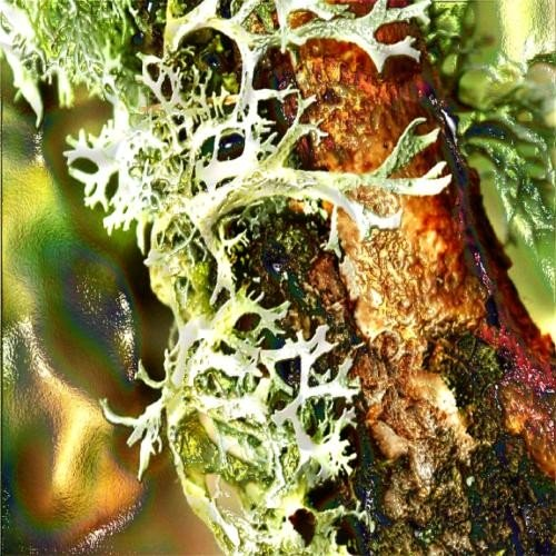 Oakmoss Resinoid Essential Oil