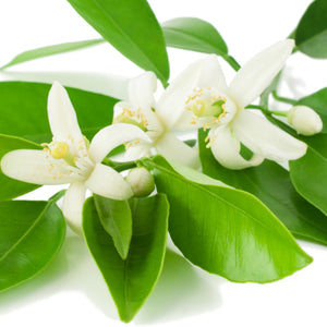 Neroli (Italy) Essential Oil