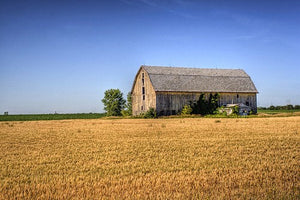 Wheat Field Barn Midwest Wisconsin