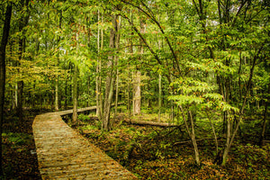 Nature Trail Fine Art Photograph