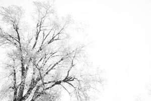 The Minimal Tree Nature Fine Art Photo