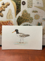 Load image into Gallery viewer, American Oystercatcher Original (1)