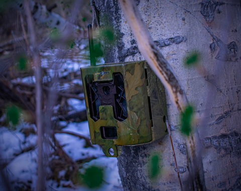 Close up on green camo trail camera