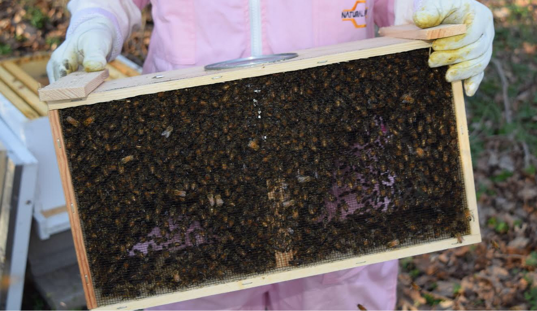 Italian Bee Packages - 3 Pounds of Bees with Mated Queen
