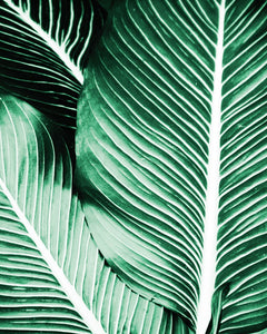 HOJA PALMERA LAMINA VERDE GREEN LEAVES PALM