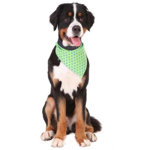 Blue Circle Bandana - Furevables Pet Boutique