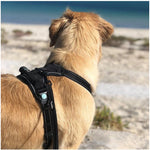 Dog Harness - Huskimo Ultimate - Bells Beach - Furevables Pet Boutique