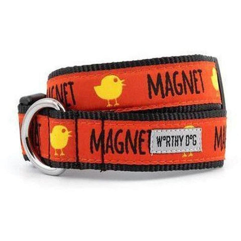 Chick Magnet Dog Collar -Small - Furevables Pet Boutique