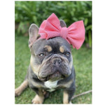 Pet Bows Headband - Furevables Pet Boutique