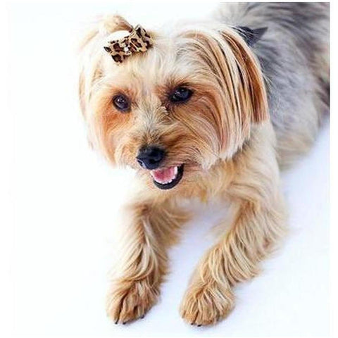 Leopard Suede Dog Hair Bow - Furevables Pet Boutique