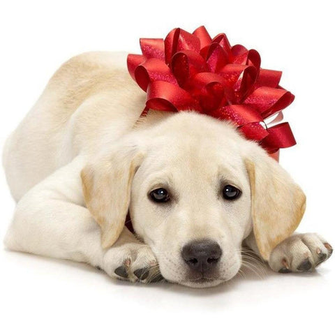 Gift Voucher - Furevables Pet Boutique