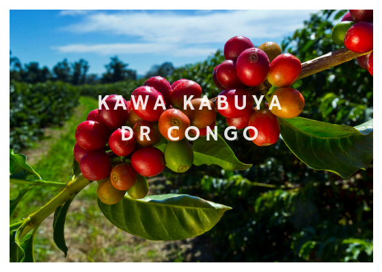 Kawa Kabuya - DR Congo - Fully Washed Heirloom Arabica