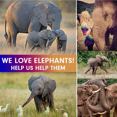 HELP ELEPHANTS TODAY! WE'RE DONATING 20% FOR WORLD ELEPHANT DAY