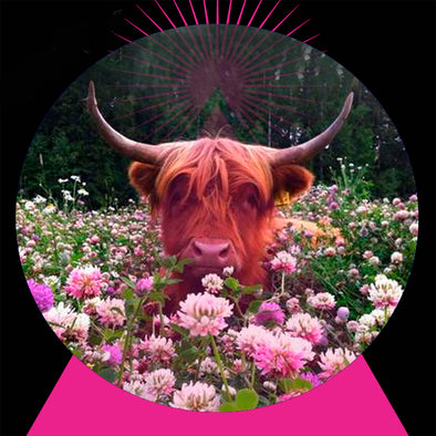 APRIL 26TH, 2017 ASTROLOGY & ENERGY: NEW MOON IN TAURUS