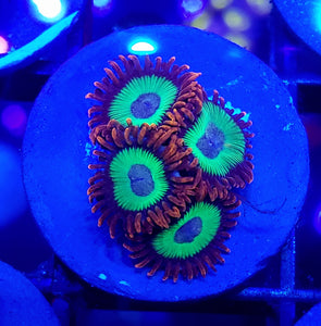Emeralds on Fire Zoas