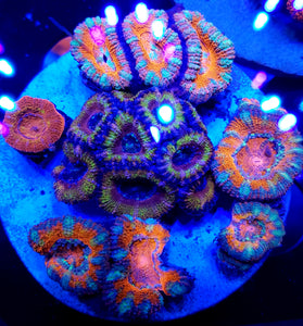 Ultra Acan Combo Disk