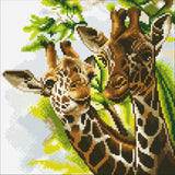 "CAK-A86: ""Friendly Giraffes"" 30 x 30cm (Medium)"
