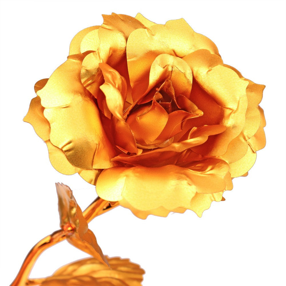 Unisexual flowers information rose