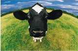 "5D DIY Diamond embroidery Painting Kits -Full Square / Round Drill ""Cows""-Scrap n Patch"