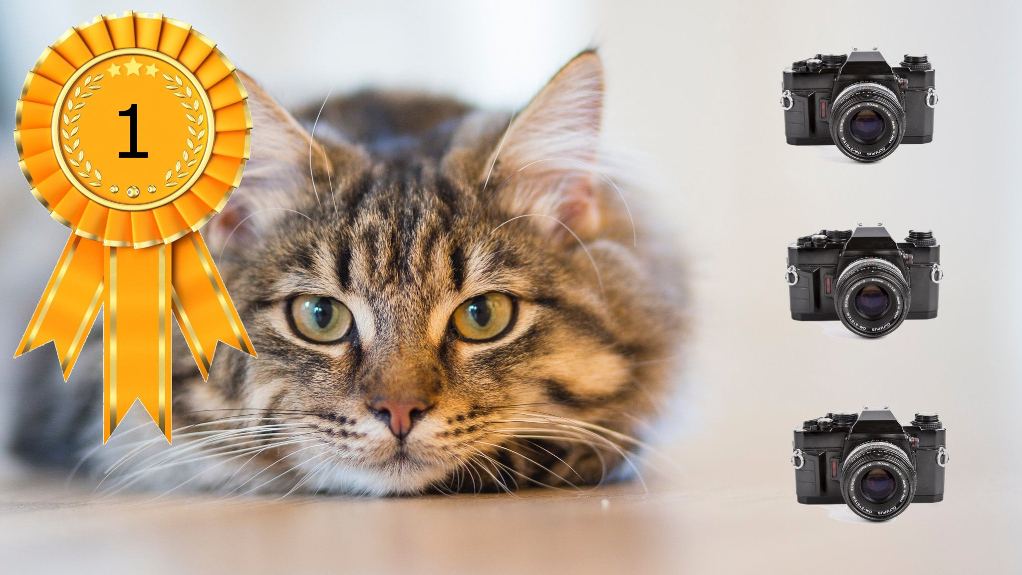 10 Helpful Tips For Improving Your Cat Photography Skills