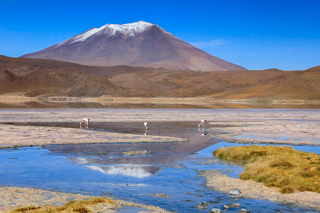 Two flamingos feeding in a shallow lake with a snow capped volcano behind and reflected in the water, part of the travel that inspired the creation of Asmuss clothing to provide stylish sustainable clothing