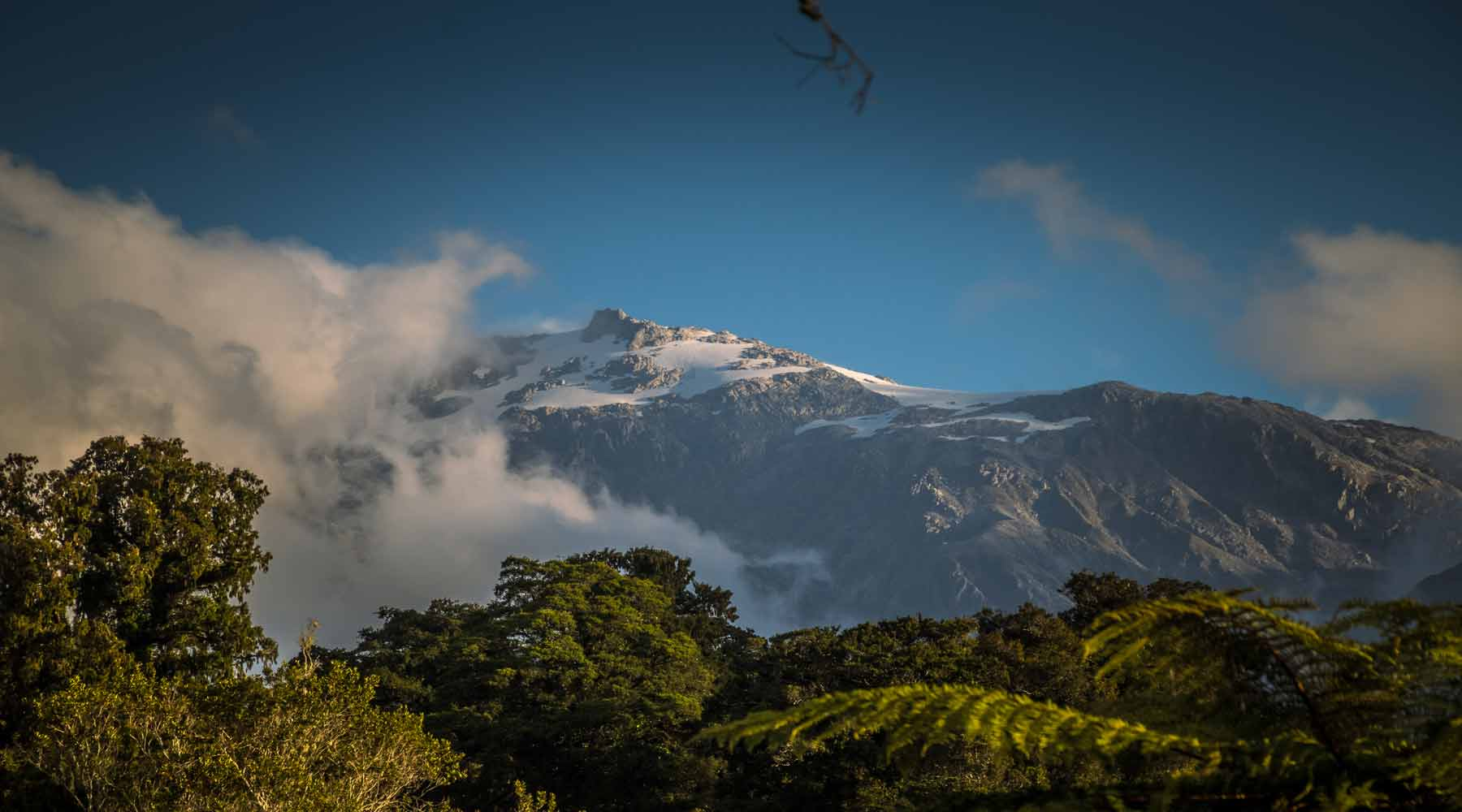 Snow capped mountain with pink tinged clouds above New Zealand native bush
