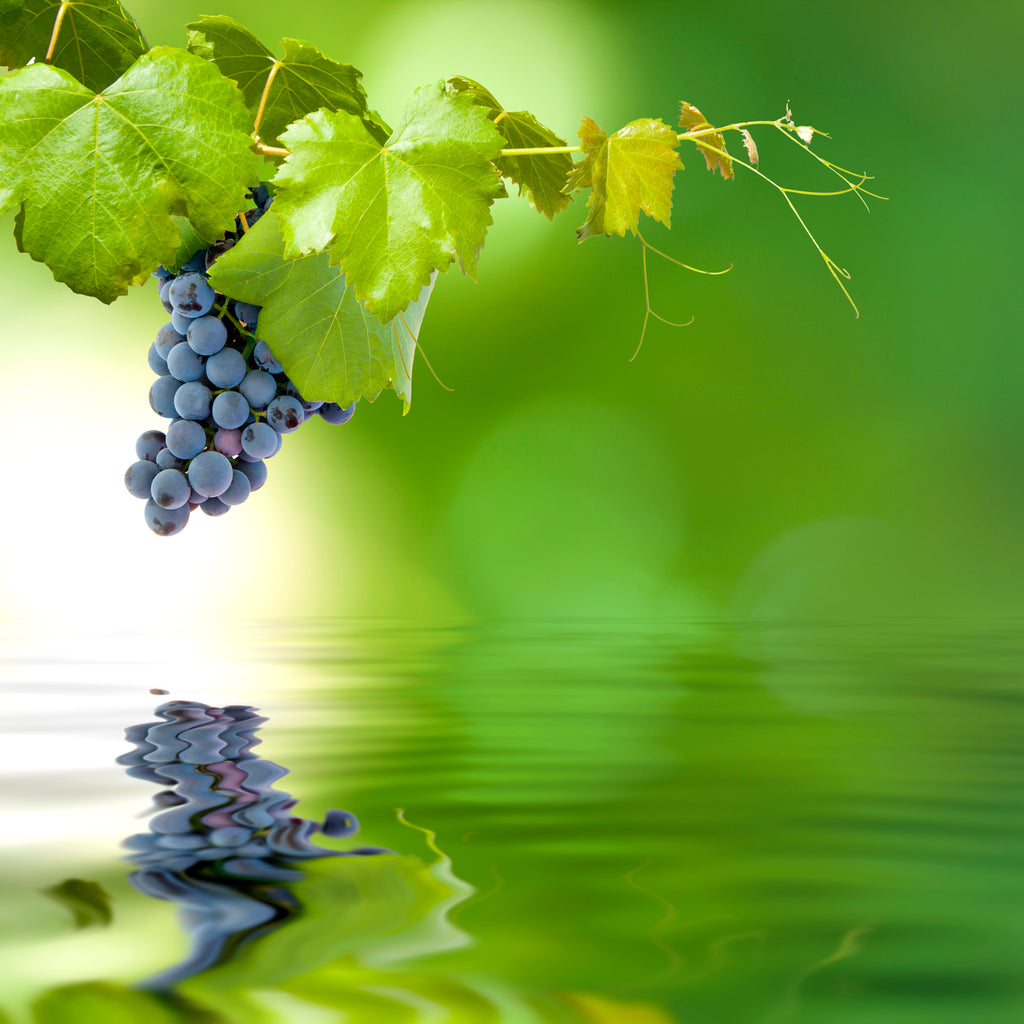 Cool Climate Wines Explained