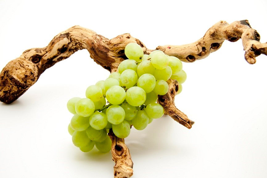 The History of Chardonnay - quick version