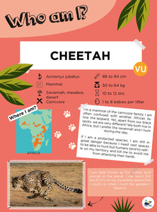 Giveaway - Part 3 - Cheetah