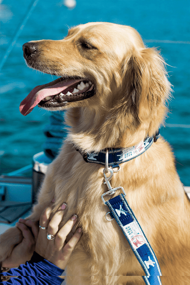 sound hound leash from a sailing gear company