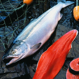 Image result for  Salmon fish in canada