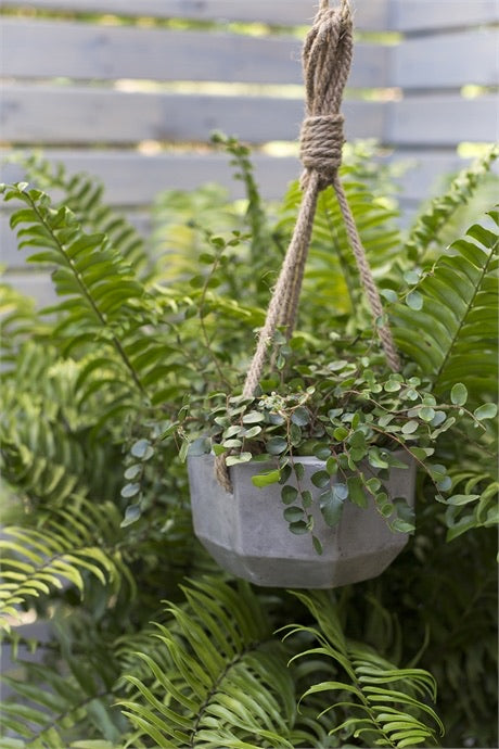 Grey Hanging Planter