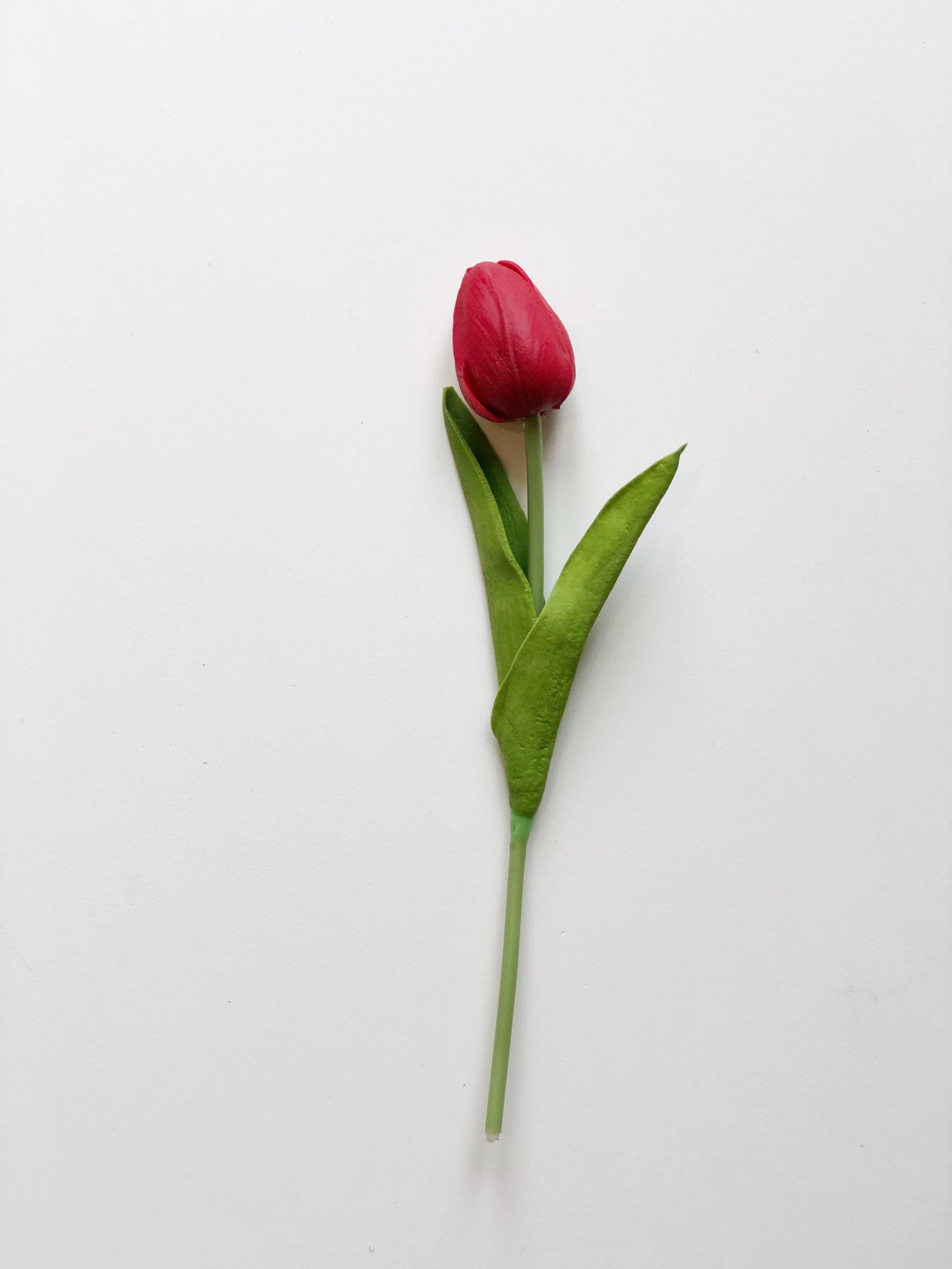 Tulip-Short Stem