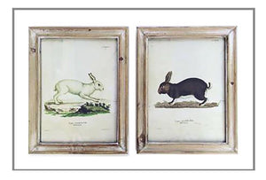 Framed Rabbit Print-2 styles
