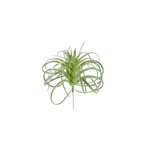 Small Air Plant Pick