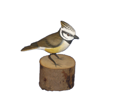 Bird on Log - Crested Tit